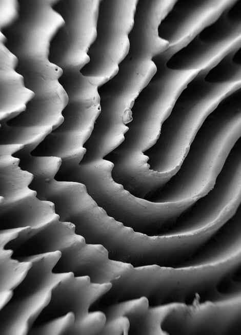 Ferrofluid Finger Print