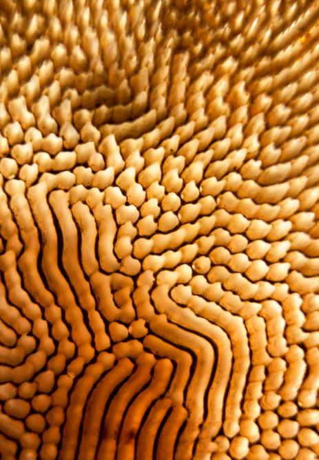 Ferrofluid Casting