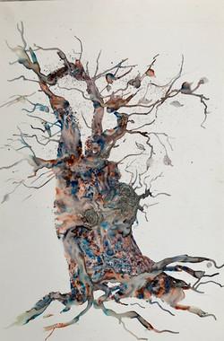 Sheila Karran, The Old Olive Tree