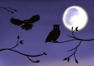 Owls Alight