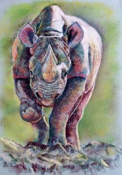 Jim Dowton Rhino