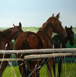 Horses May 2014.jpg