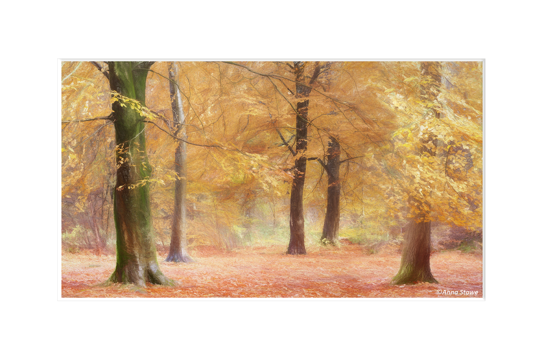 Savernake Forest_Autumn_21_Art 16 to 9 M