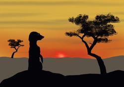 Gill Olney The Lookout (Meerkat)