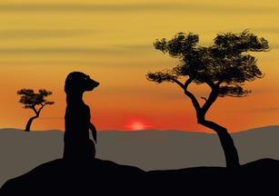 The Lookout (Meerkat)