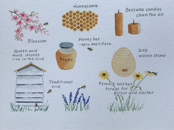 Sue Impey Submission 2 - The Honey Bee
