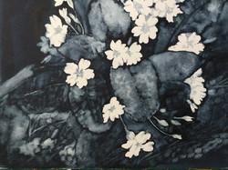 Primroses, Janet Fairman
