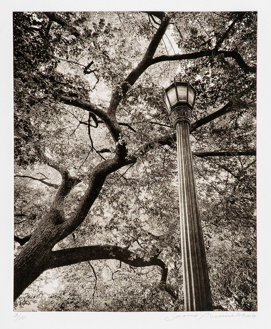 Socorro Mucino - Looking Up II