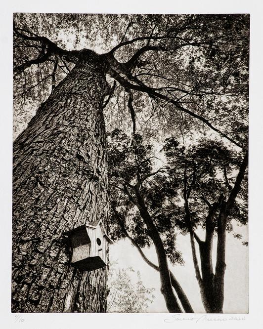 Socorro Mucino - Looking Up III