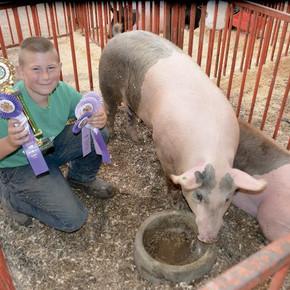 Kid's Open Class Livestock Show