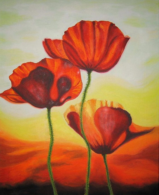 Poppies bloom
