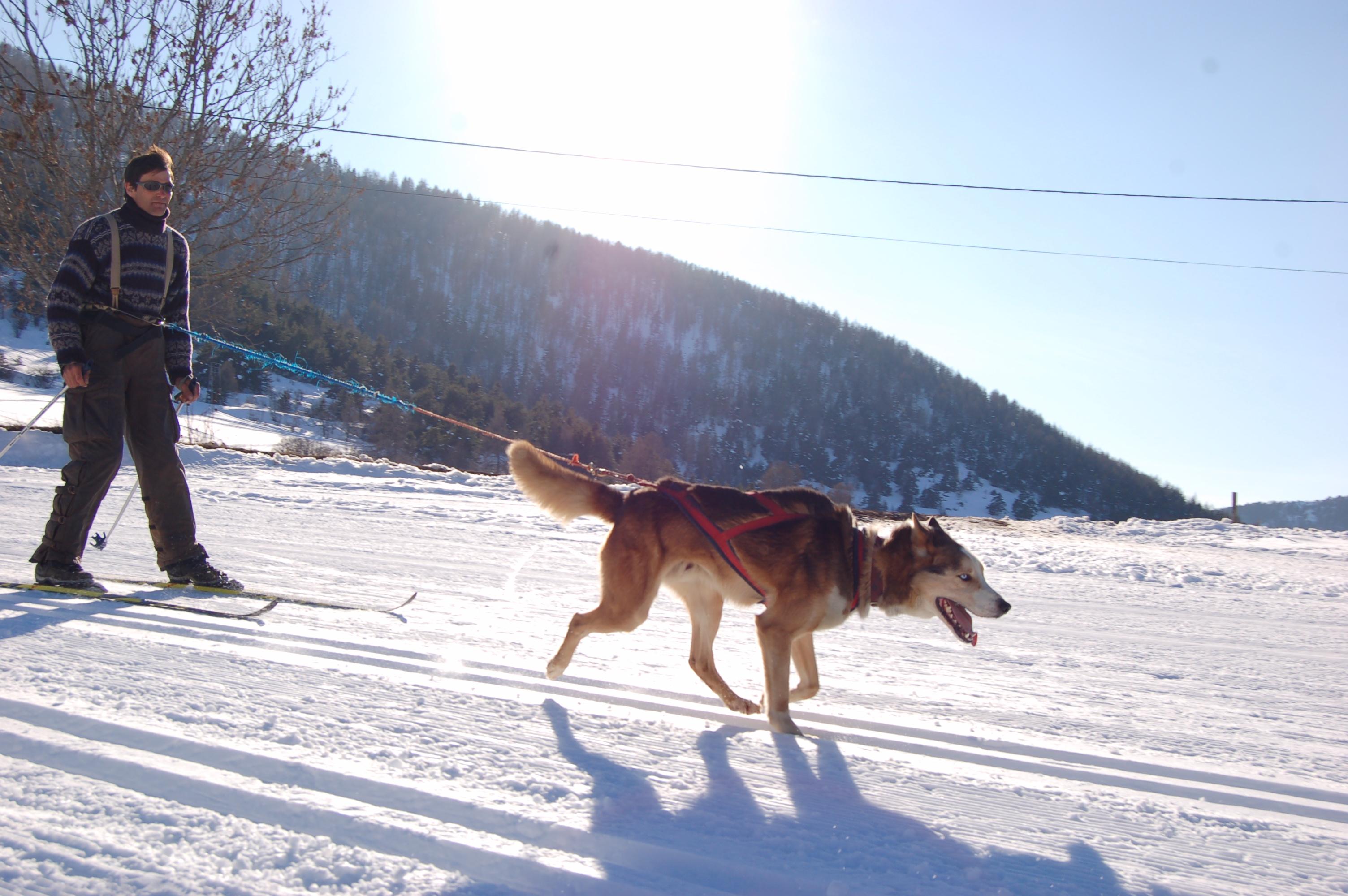 Ski joëring dans le Jura