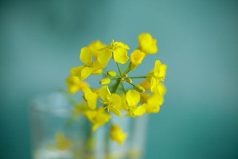 Fleurs de Bach Carole Imbert.jpg