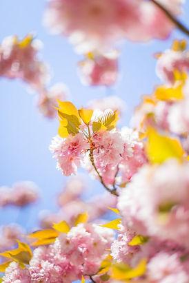 fleur printemps.jpg