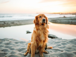 Best Dog Beaches and Parks in San Diego