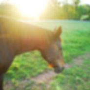 Equine Natual Health