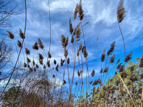 Bioregional Herbal Strategies for COVID-19 in the Mid-Atlantic