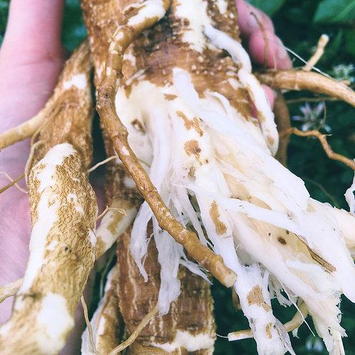 Poke Root, Tincture
