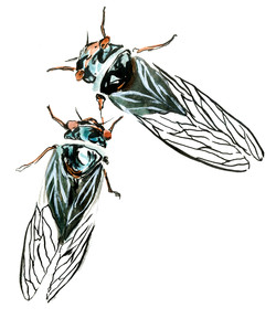 Cicada stickers, 2016