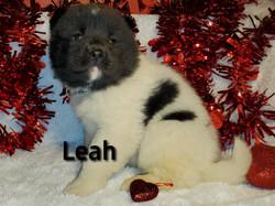 Leah left.jpg