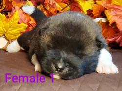 2wk Female 1 face.jpg