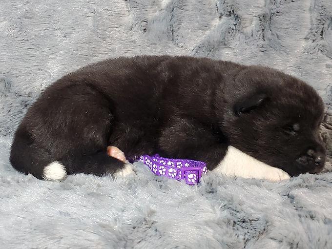 Dk purple female.jpg