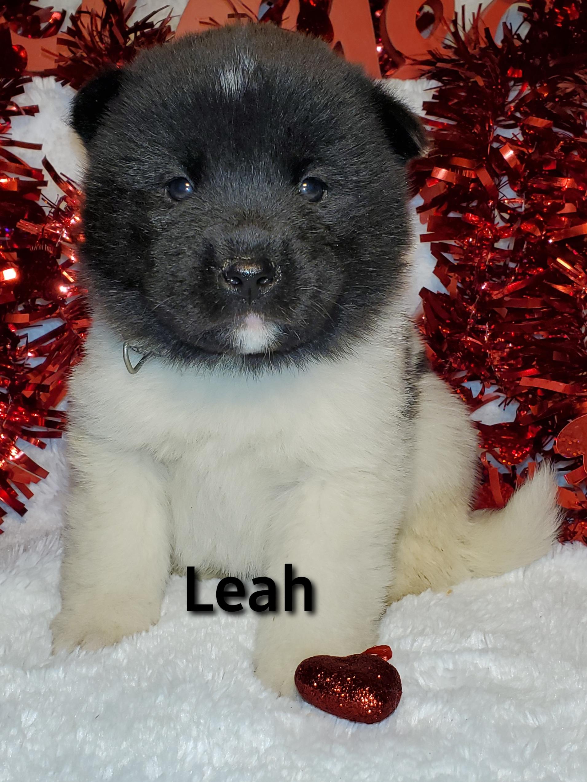 Leah front.jpg