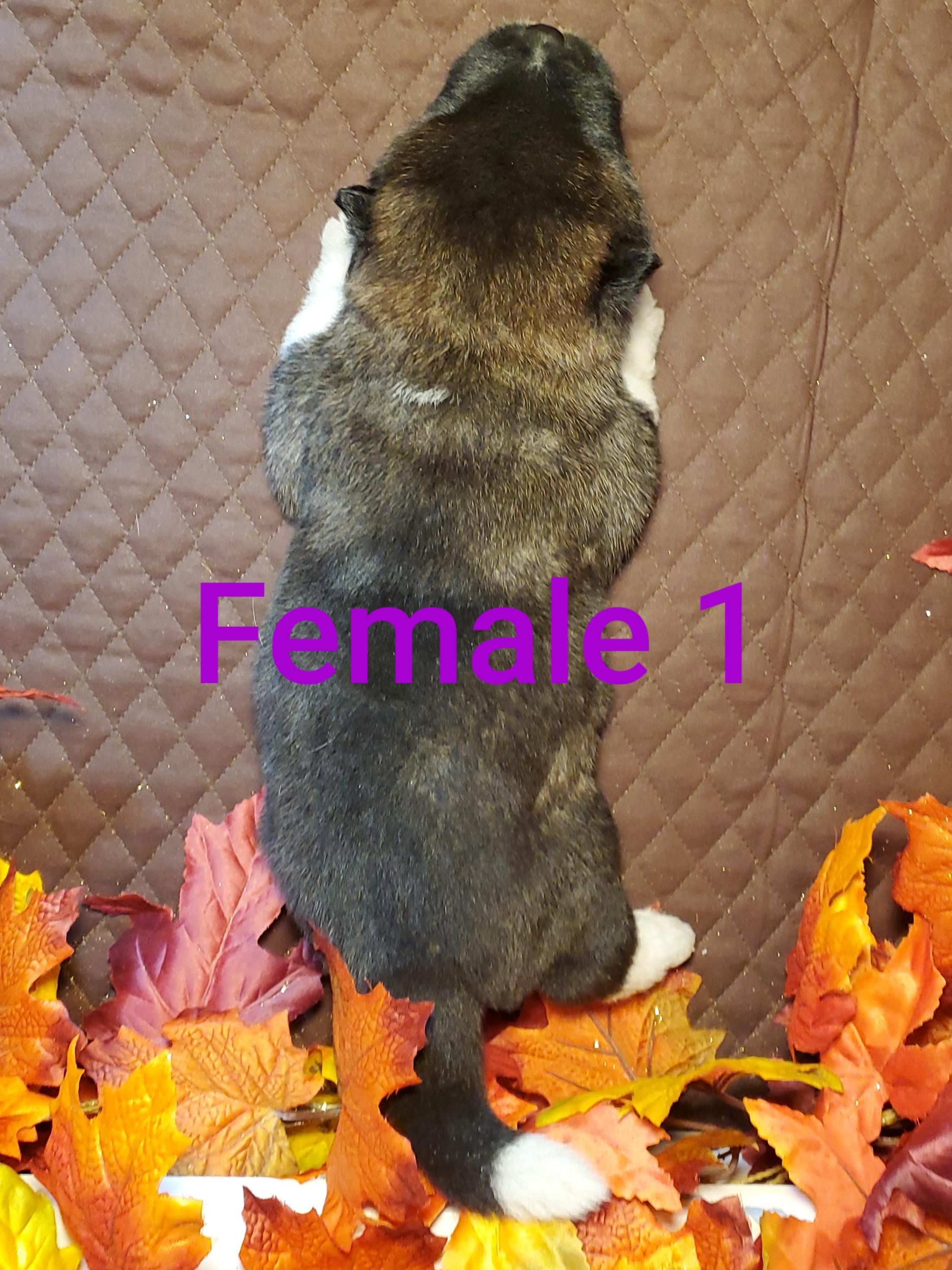 2wk Female 1 back.jpg