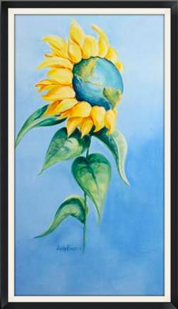 Sonflower