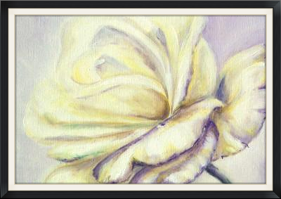 White Rose Unfocused