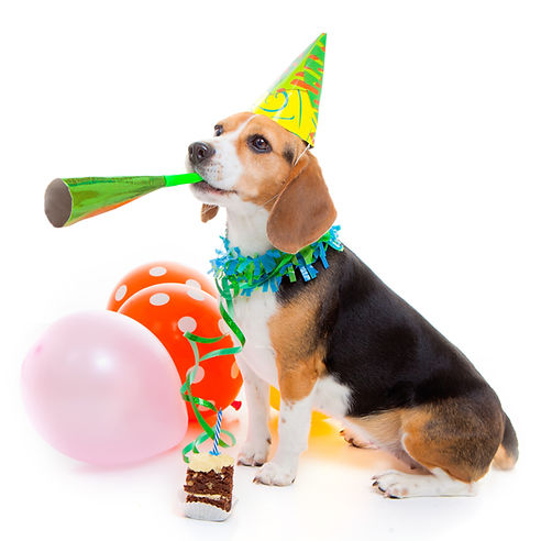 birthday%20dog_edited.jpg