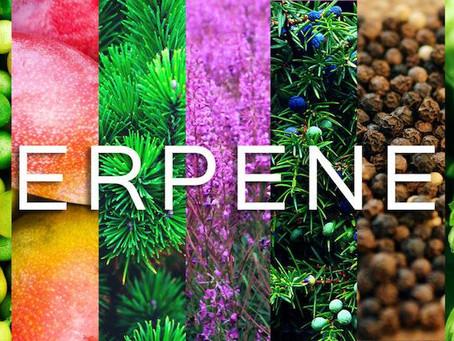 Let's Talk About Terpenes :)