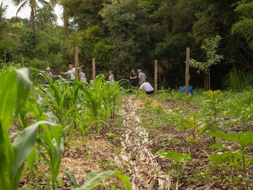 Educação, Plantio e Pesquisa e Desenvolvimento de fibras e pigmentos vegetais