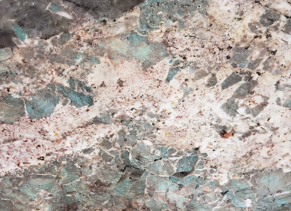 ammonite slab