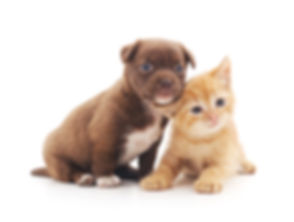 Puppy and kitten isolated on a white bac