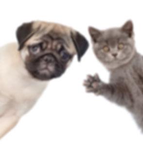 Peeking cat and dog. isolated on white b