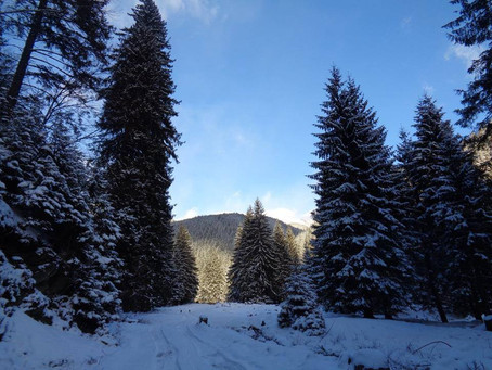 Why you should go hiking in winter