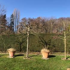 Baumschnitt Zierapfel 3.jpeg