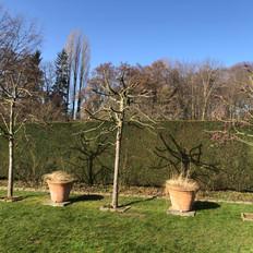 Baumschnitt Zierapfel 4.jpeg