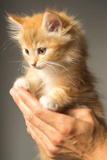 kitten lea atelier journal.jpg