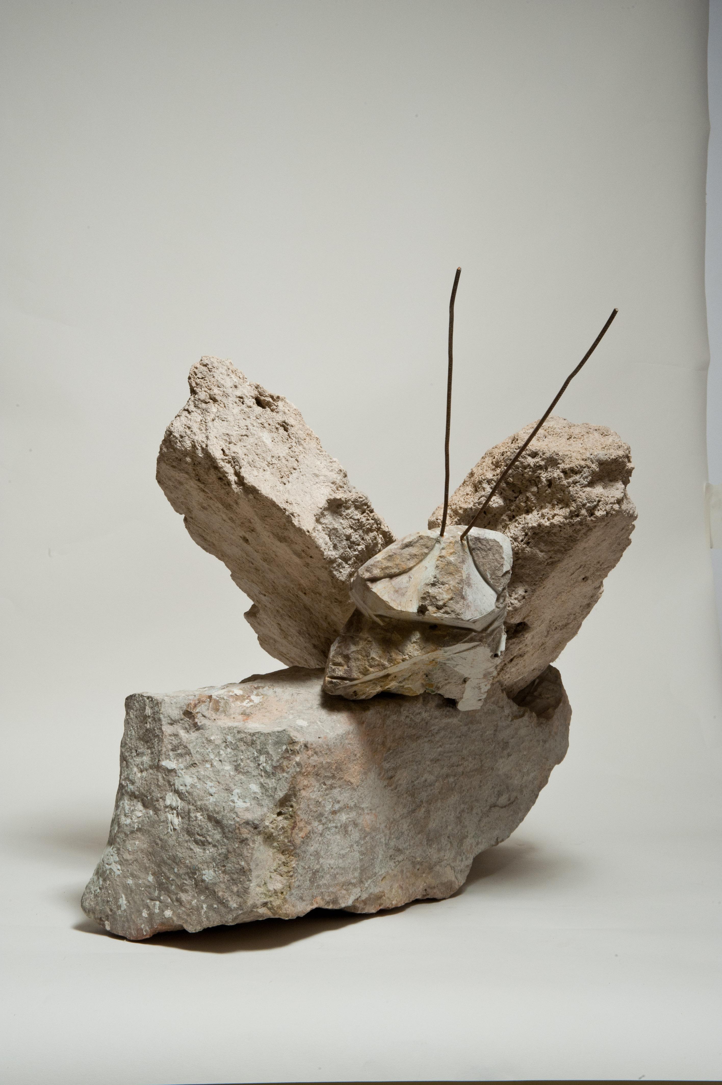 Moth.