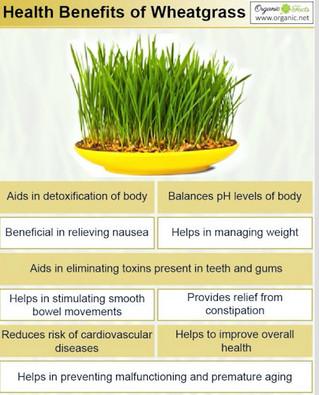 Health & Nutritional Benefits of iJuice Wheatgrass