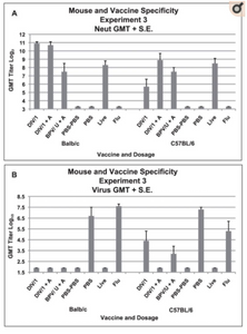 Mean lung cellular infiltration/lesion pathology and percent eosinophils in infiltrates for each vaccine dosage group for each mouse strain (Balb/c or C57BL/6) two days after challenge with SARS-CoV. A. Mean lesion score and standard error of the mean (S.E.) for each vaccine dosage group. Scores are mean of scores for seven to eight mice per group. Scoring 0 - no definite pathology, 1 - mild peribronchiole and perivascular cellular infiltration, 2 - moderate peribronchiole and perivascular cellular infiltration, 3 - severe peribronchiole and perivascular cellular infiltration with thickening of alveolar walls, alveolar infiltration and bronchiole epithelial cell necrosis and debris in the lumen. Ten to 20 microscopy fields were scored for each mouse lung. B. Mean score and standard error of the mean (S.E.) for eosinophils as percent of infiltrating cells for each vaccine dosage group. Scores are mean of scores for seven to eight mice per group. Scoring: 0 - <5% of cells, 1 - 5–10% of cells, 2 - 10–20% of cells, 3 - >20% of cells. Ten to 20 microscopy fields were scored for each mouse lung. Analyses: A. Mean lesion scores were not different p>.05. B. Mean eosinophil scores were different p<.001. Mean scores for vaccine groups greater than non-vaccine groups for Balb/c and C57BL/6 p<.001 for all comparisons. Mean eosinophil scores for the same groups not different for Balb/c and C57BL/6 p>.05.