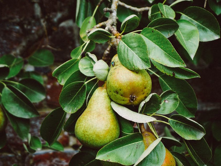 Sautéed Pears & Plums