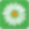 Period Tracker Logo, a white daisy head on a green background