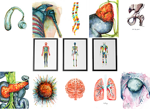 10 unfamed prints of various body parts and organs done in watercolos, anthor print of a cochlear implat and a cancer cell in the same style, and 3 framed prints showing different full-body systems also in watercolor.