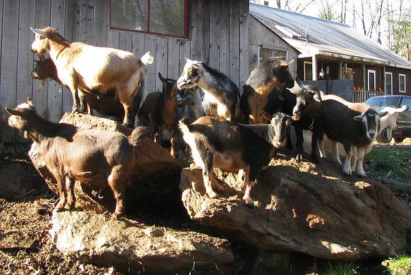 Rock Herd.jpg