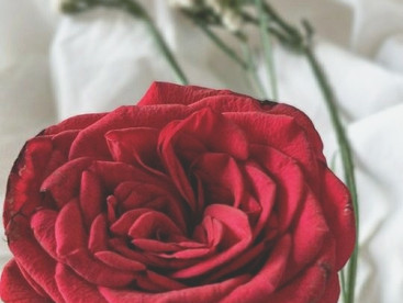The Rose - A poem on Aging