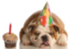 הפעלות ליום הולדת