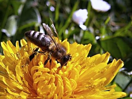 Plant-pollinator dynamics